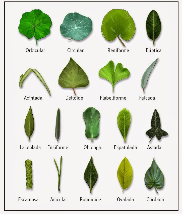 Plantas medicinales centro el campillo - Lista nombre arbustos ...